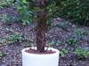 leihpflanzen-2